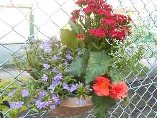 ポットの花.jpg